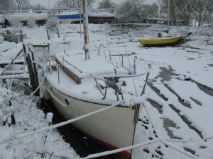 Penny Jane in Winter